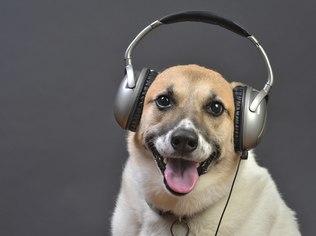 ano-novofogos-cachorros